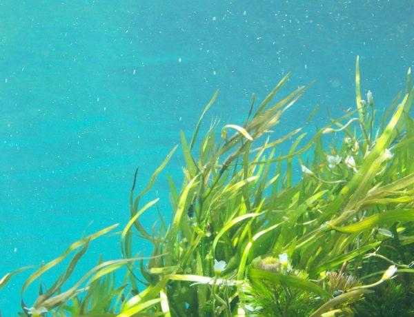 algi morskie w kosmetykach