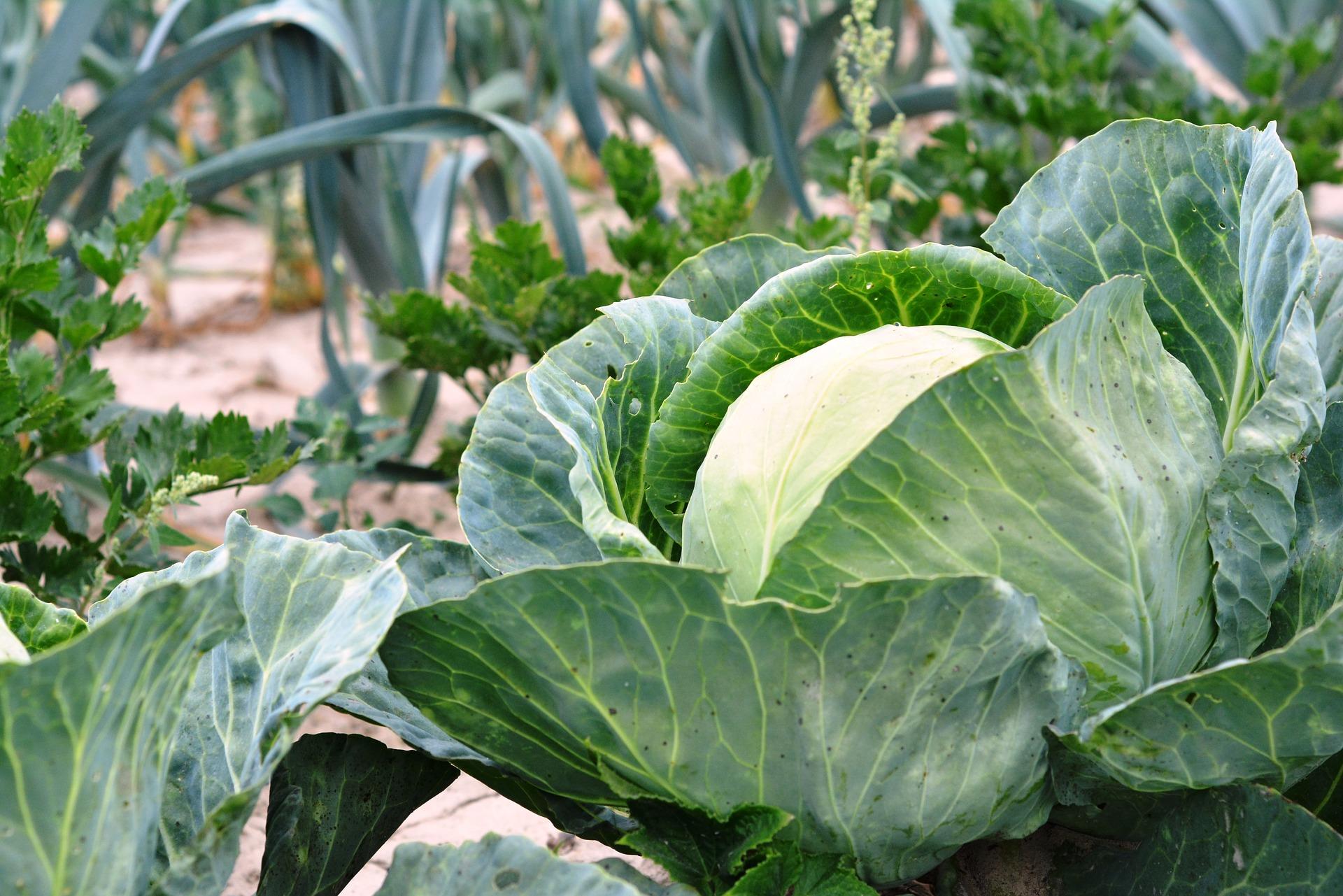 warzywa-ekologiczne